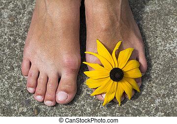 gros plan, femme, orteils, pieds, fleur, entre