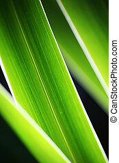gros plan, herbe, résumé vert, fond
