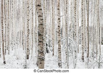 gros plan, hiver, bois, finlande, bouleau