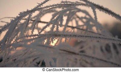 gros plan, hiver, neigeux, parc, branche, sunset.