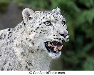 gros plan, léopard, neige