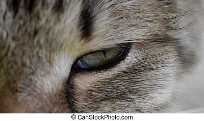 gros plan, oeil, macro, hd:, chat, extrême