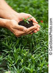 gros plan, plante, nouveau, vert, tenue, mains, vie,  mâle