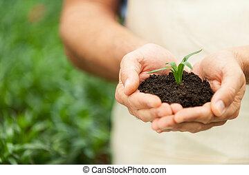 gros plan, plante, vert, tenue, mains, nouveau,  mâle, vie