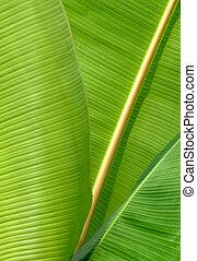 gros plan, quelques-uns, banane, pousse feuilles