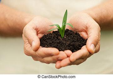 gros plan, tenue, plante, vert, croissance, mains, nouveau,  mâle