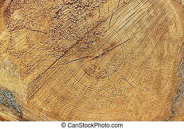 gros plan, vieux, section, arbre, croix, pin, texture, fond, rugueux