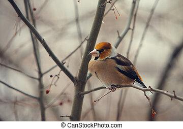 grosbeak perched on a branch