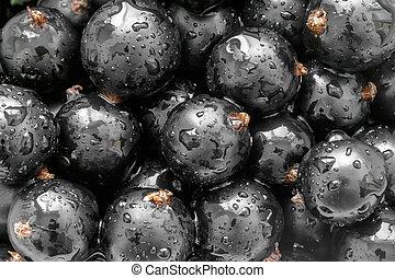 grosella negra