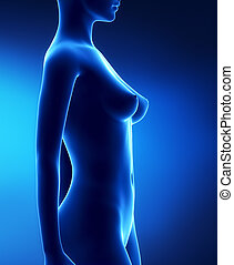 grossesse, 1, étapes, -, mois