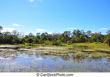 grosso, überschwemmt, pantanal, wald, mato, (brazil)