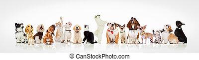 grote groep, op, het kijken, poezen, nieuwsgierig, honden