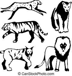 grote katten, vijf