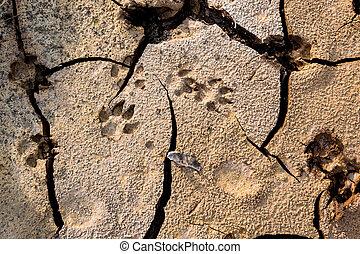ground., ραγισμένος , πατημασιά , σκύλοs