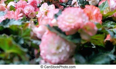 ground., цветок, все, возможное, выращивание, видеть, камера, это, цветы, марки, sides, движение