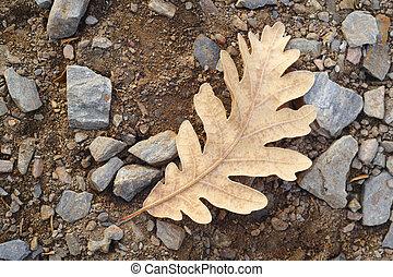 ground., blad, natuur, bevroren, macro, eik, herfst, foto