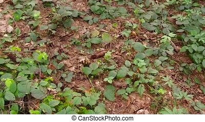 Ground cover in the spring, nature of forest in details