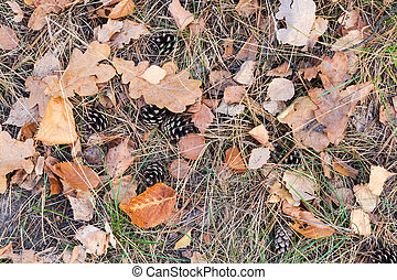 Ground in forest covered with fallen leaves, needles and cones