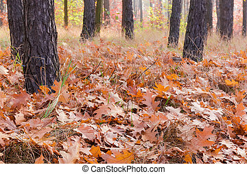 Ground in the forest covered with fallen leaves in autumn