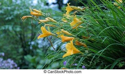 ground., kwiat, wszystko, możliwy, rozwój, zobaczcie, aparat fotograficzny, to, kwiaty, marki, boki, ruch