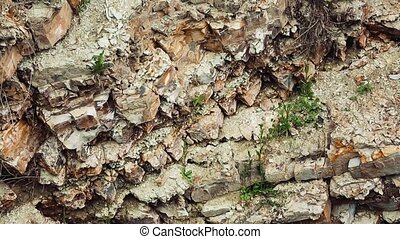 Ground level shot of rocks in a forest
