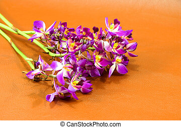 ground orchid flowers on brown background.