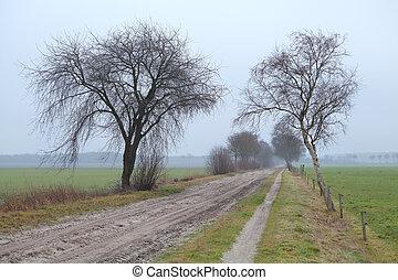 ground road between trees in fog