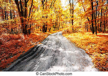 Ground road in the autumn forest