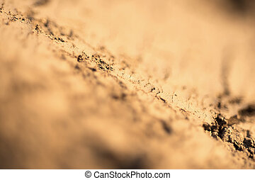 Ground Texture Close Up, Selective Focus and Shallow Depth of Field. Abstract Nature Background.