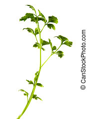 ground with green parsley on a white background