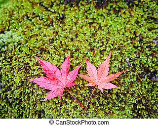 ground., zöld, zöld, juharfa, moha, esés, felett, piros