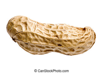 Isolated image of a groundnut.