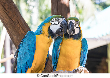Group Bird Blue-and-yellow macaw standing on branches