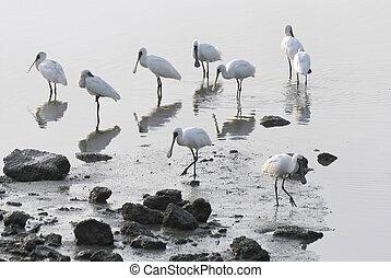 group egret