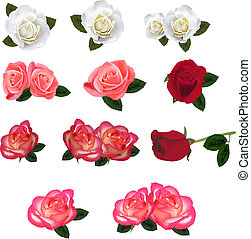Group of a beauty roses. vector.