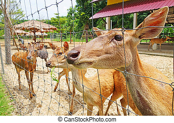 group of a deers in a farm
