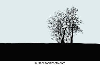 Group of acacias on the horizon