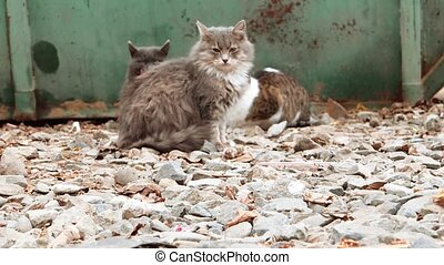 Group of alley cats sitting near trash dumpster and looking about. Focus on gravel of forefround, blurred cats on background.