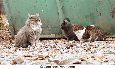 Group of alley cats sitting near trash dumpster and looking about.