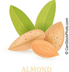 group of almonds with leaves on white background for your design