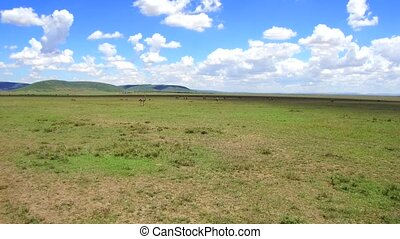group of animals and birds in savanna at africa - animal,...
