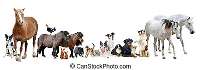 group of animals - group of farm animals and pets in front...