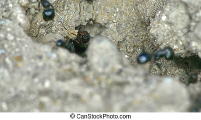 Group of ants on the ground close up 4k