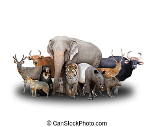 group of asia animals on white background