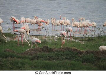 group of attractive flamingos