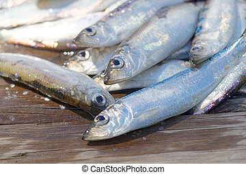 Group of newly catched baltic herring laying on the bridge
