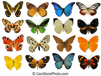 group of beautiful colorfull butterfly in front of white background