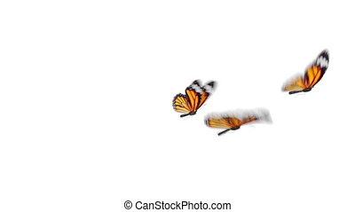 Group of Beautiful Orange Colored Butterflies Monarch Danaus Plexippus Flying on White and Green Backgrounds Close-up. Seamless 3d Animation with Green Screen Alpha Channel. 4k UHD 3840x2160