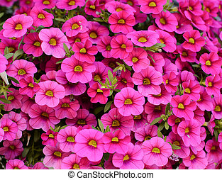 Group of beautiful pink flowers