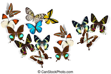 group of butterflies - group of a butterflies on white ...